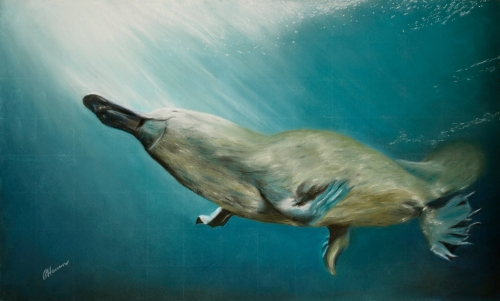 platypus medium 14.11.2103